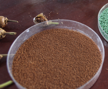 Tabak Anpflanzen Alle Tipps Zum Anbau Cigarworld De